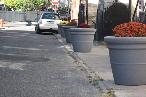 Planters in Somerset